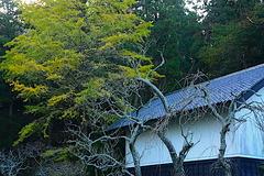 191203東慶寺黄葉