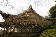 090124安国論寺ウメの木
