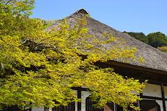 170413円覚寺新緑