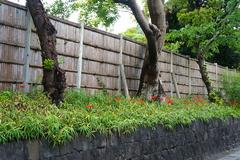 160924鶴岡八幡宮ヒガンバナ1