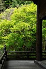 070411妙本寺新緑