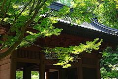 200617妙本寺新緑