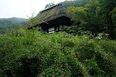 180915海蔵寺ハギ
