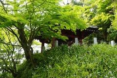 140416妙本寺シャガ