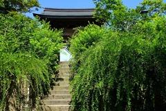 140727海蔵寺ハギ