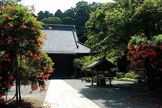180711妙本寺ノウゼンカズラ