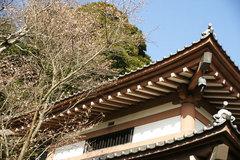081230長谷寺十月桜