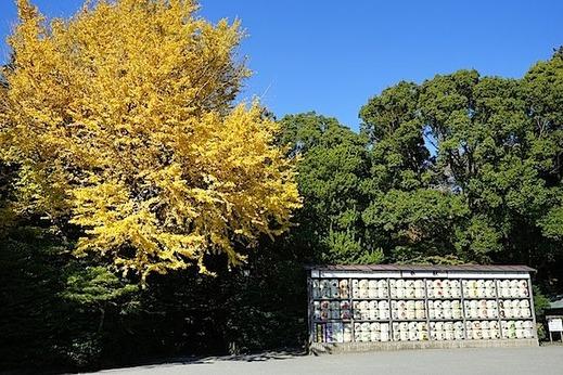 1501209鶴岡八幡宮黄葉