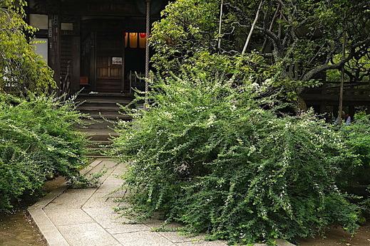 200919宝戒寺ハギ2