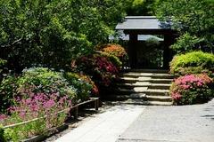 130602浄智寺サツキ