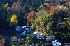 131202円覚寺東慶寺遠望