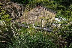 201007浄智寺ススキ2