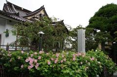 120814妙隆寺フヨウ2