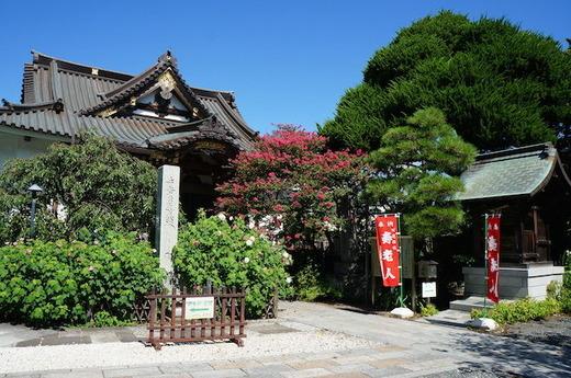 150827妙隆寺サルスベリ2
