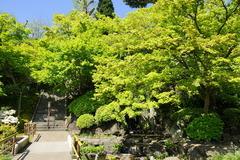 160418長谷寺新緑