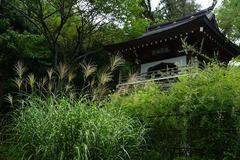 140831浄智寺ススキ、ハギ