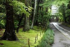 110528寿福寺新緑2