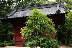 160626妙本寺ノウゼンカズラ1