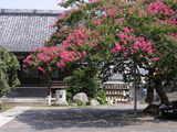 050806本興寺サルスベリ1