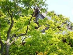 140423建長寺新緑