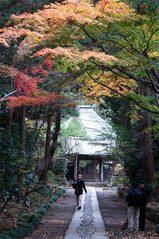 051211寿福寺紅葉