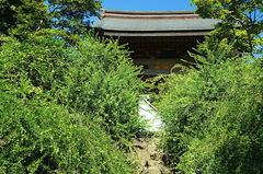 180826海蔵寺ハギ1