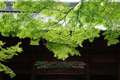 160427妙本寺新緑1