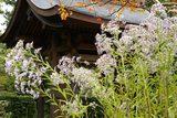 071031海蔵寺シオン