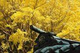 051126八雲神社黄葉