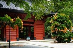 130714妙本寺ノウゼンカズラ3