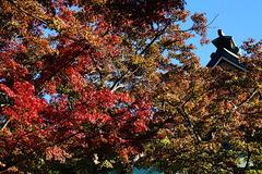 201114円覚寺紅葉3