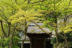 150412円覚寺新緑3
