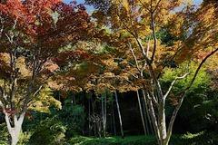 151116海蔵寺紅葉
