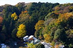 161125円覚寺より東慶寺