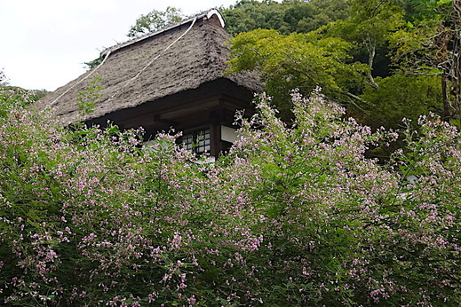 200919海蔵寺ハギ3