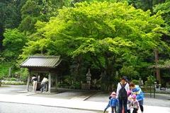 140501妙本寺新緑
