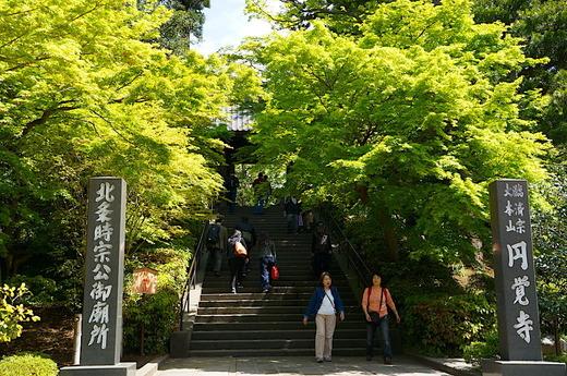 180416円覚寺新緑