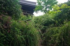 190921海蔵寺ハギ1