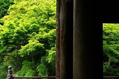 150505妙本寺新緑