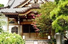 妙隆寺サルスベリ