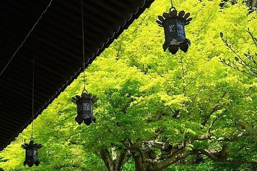 150416長谷寺新緑2