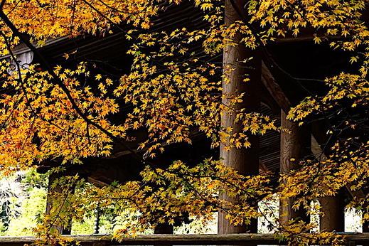 191229妙本寺紅葉1