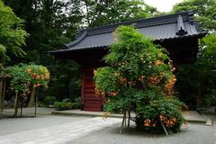 160706妙本寺ノウゼンカズラ2