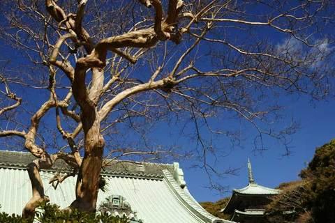 100206龍口寺枯れ木2