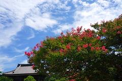 170818本覚寺サルスベリ2