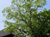 050504円覚寺新緑