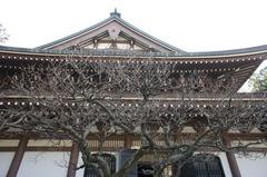120118円覚寺1