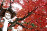 051203鎌倉宮紅葉2