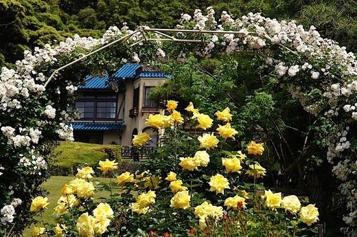 150517鎌倉文学館バラ3