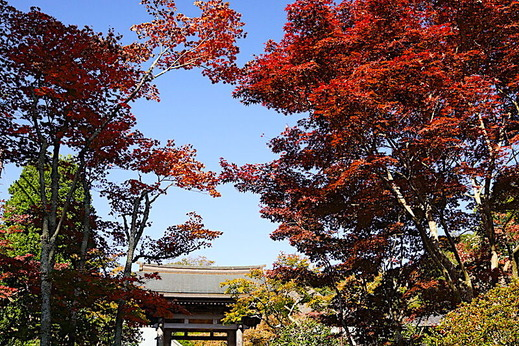 201116海蔵寺紅葉1